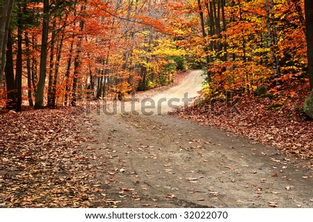 Trail through group of colorful trees in autumn park