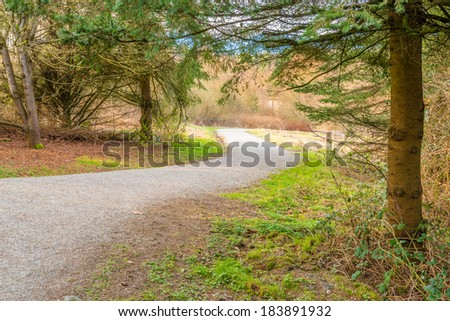 Trail through lush green forest in Deer Lake Park, Vancouver, Canada.