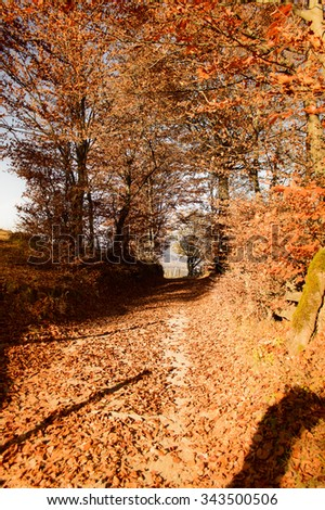 trail through the autumn forest