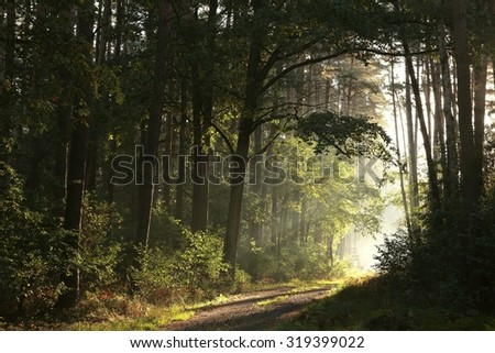 Trail through the autumnal forest on a foggy morning.
