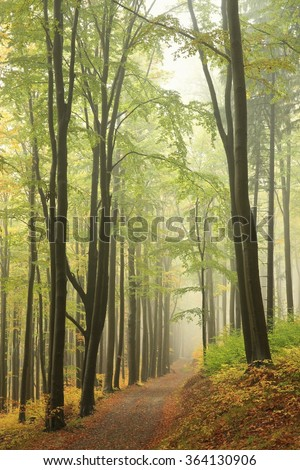 Trail through the beech forest in early autumn. Poland, Europe. - stock photo