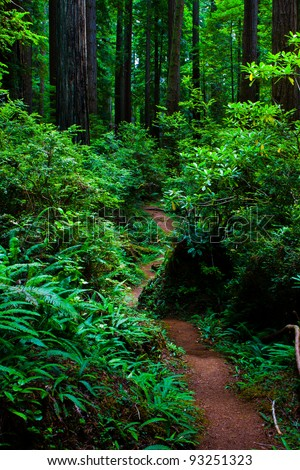 Trail through the Redwood Forest - stock photo