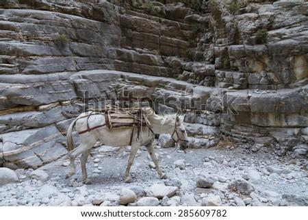 Trail thru Samaria gorge, central part of Crete island, Greece - stock photo