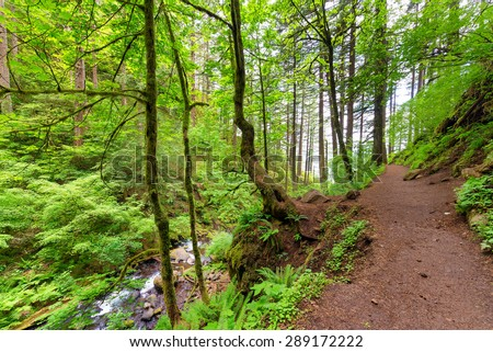 Trail to Horsetail Falls in the Columbia River Gorge near Portland, Oregon - stock photo