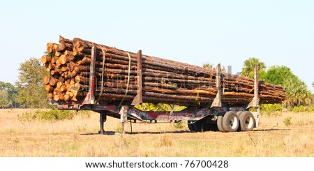 Trailer full of pine logs from a logging operation in Florida - stock photo