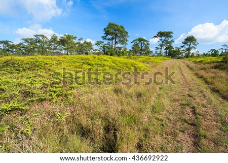 trails in pine forest with meadow and blue sky most cloudy - stock photo