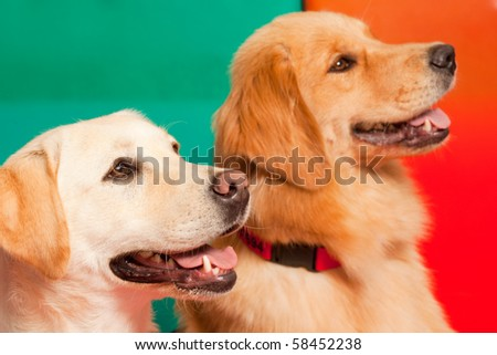 Trained dogs for Assisted therapy - stock photo