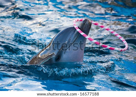 Trained Dolphin - stock photo