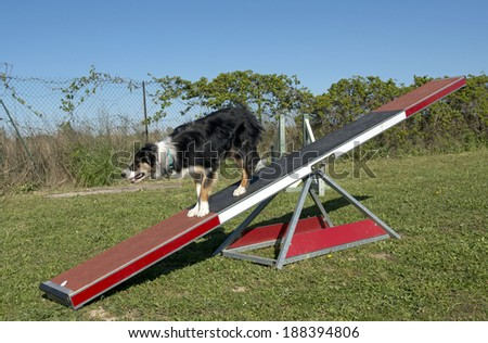 training of agility in a canine club