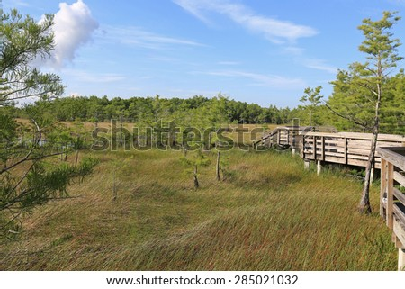 Tranquil Grassy Waters Preserve in West Palm Beach, Florida is a great place to visit, and see the cypress swamp and everglades wildlife. - stock photo