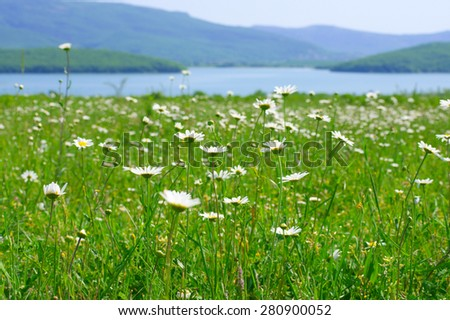 Tranquil rural landscape: spring meadow with daisy against lake and mountains. Shallow DOF, focus on foreground. - stock photo
