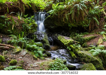 tranquil waterfall running thru ferns and large redwood trees in northern California - stock photo