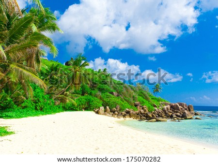 Tranquility Palms Panorama  - stock photo