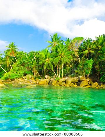 Tranquility Shore Jungle - stock photo