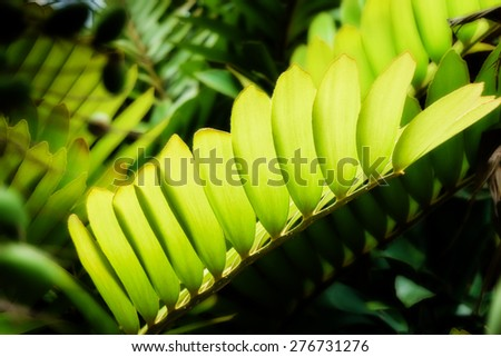 translucent leaves and fresh green leaf, close up - stock photo