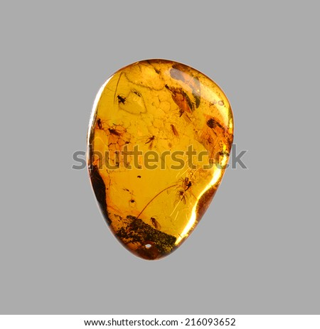 transparent Amber with insects - stock photo