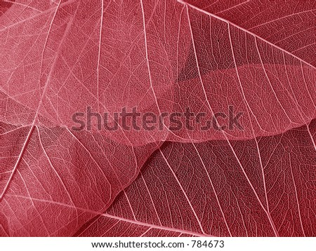 Transparent leaves - stock photo