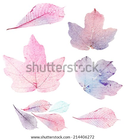 Transparent leaves isolated on white - stock photo