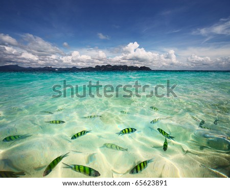 Transparent sea water with fish and blue sky with clouds - stock photo