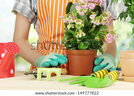 Transplant flowers in pots close-up - stock photo