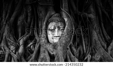 Travel to Thailand, Ayutthaya. Old tree Buddha stone sculpture. Wisdom and pray - stock photo