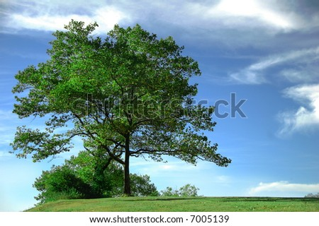 tree against blue sky and clouds on a bright day