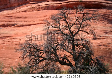 tree against red rock canyon wall - stock photo