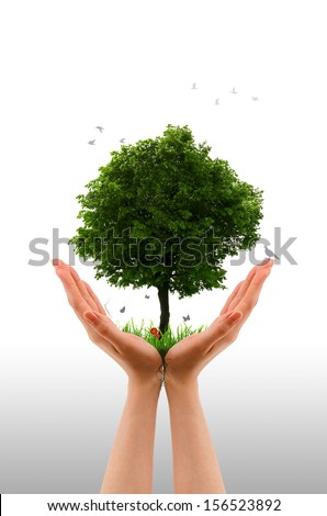 Tree alive  - Hand - stock photo