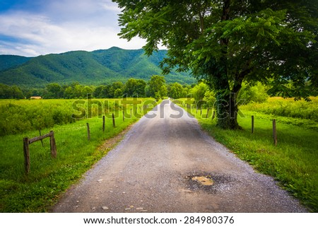 Tree along a dirt road, at Cade's Cove, Great Smoky Mountains National Park, Tennessee. - stock photo
