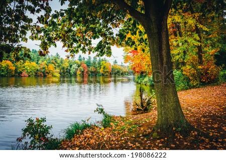 Tree along the shore of Lake Williams, near York, Pennsylvania. - stock photo