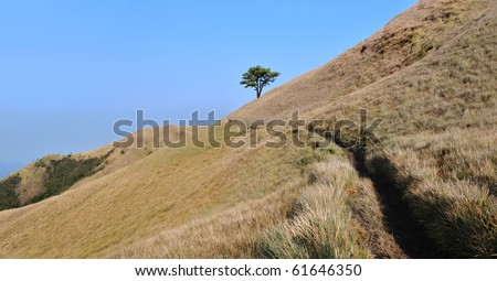 Tree and a pathway on a mountain side in the meadows with clear blue sky.