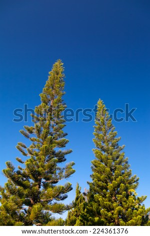 Tree and blue sky - stock photo