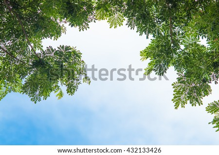tree and blue sky.background