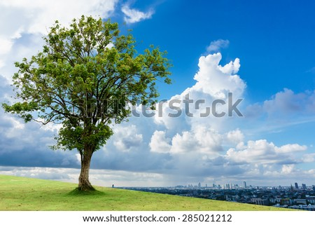 tree and cityscape, save green tree for breath in the city