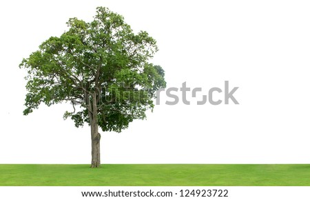 Tree and grass field isolated on white background - stock photo