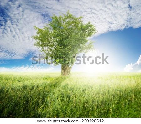 Tree and grass fields and sun sky