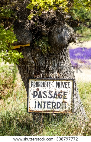 tree and lavender at background, Provence, France - stock photo