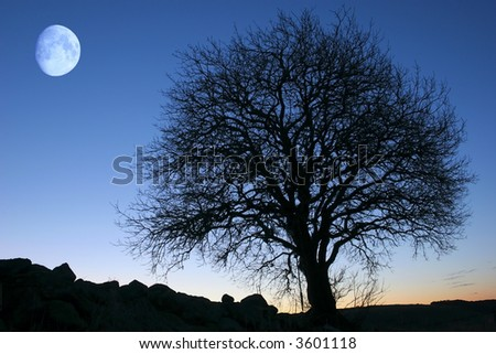 Tree and moon - stock photo