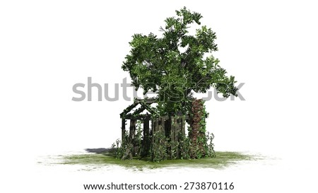 tree and old shed - isolated on white background