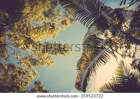 Tree and palm leaves on sky background vintage color - stock photo