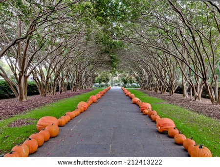 Tree and pumpkin lined walk - stock photo