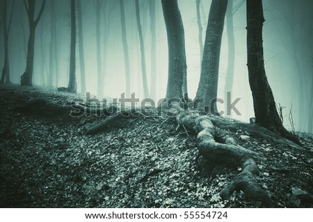 tree and roots on the ground in a dark forest - stock photo