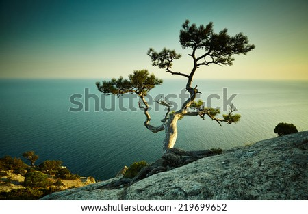 Tree and sea at sunset. Crimea landscape. Nature background - stock photo