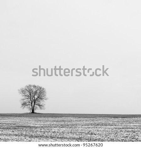 Tree and Solitude - stock photo