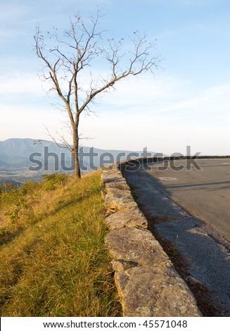 tree and stone wall at Gooney Run Overlook - stock photo