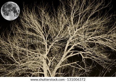 tree and the moon at night - stock photo