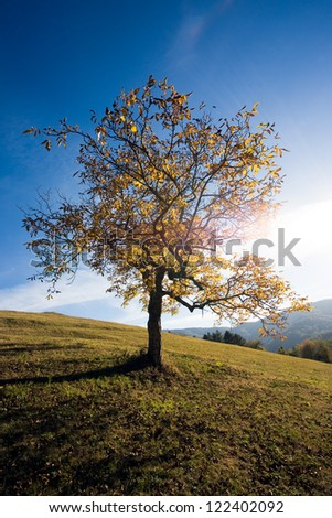 Tree and the mountains