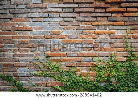 tree and vine on grunge background, red brick wall texture bright plaster wall and blocks road sidewalk abandoned exterior urban background for your concept or project - stock photo