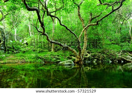 tree and water in jungle - stock photo