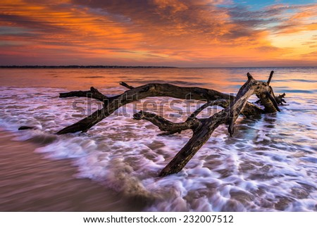 Tree and waves in the Atlantic Ocean at sunrise at Driftwood Beach, Jekyll Island, Georgia. - stock photo